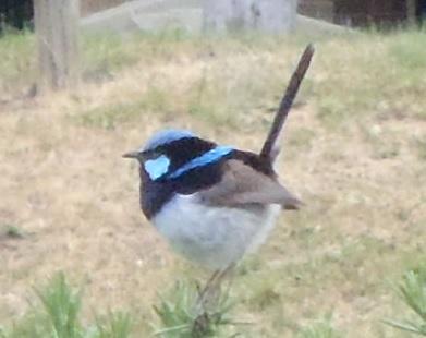 Bird008