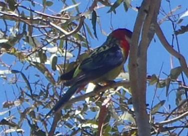 Bird021