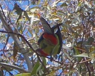 Bird023