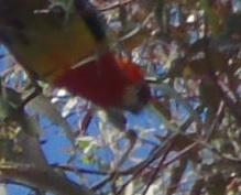 Bird024