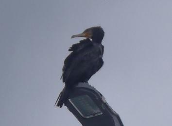 Bird028