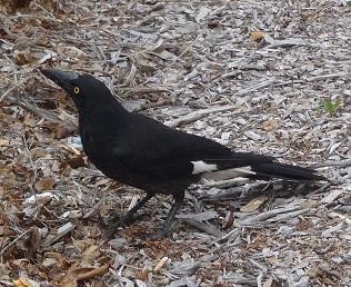 Bird030