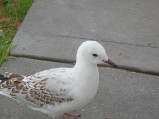 Bird032