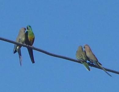 Bird033