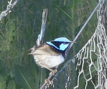 Bird034_2
