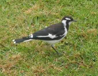 Bird036