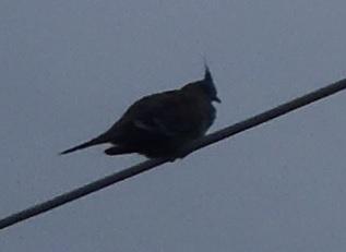 Bird043